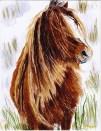 Gary Jones Carneddau Pony on Kodak Ultima copy
