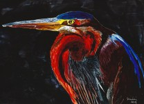 """Purple Heron"""