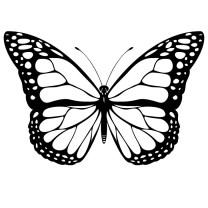 Pen Practice - Butterfly