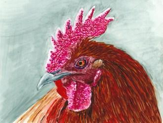 Rooster Head - comb, wattle