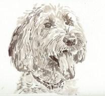 Labradoodle portrait based on Sandy Scott's image at PMP