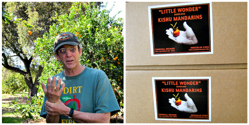 pixie tangerine, Ojai, tangerine, grower tour