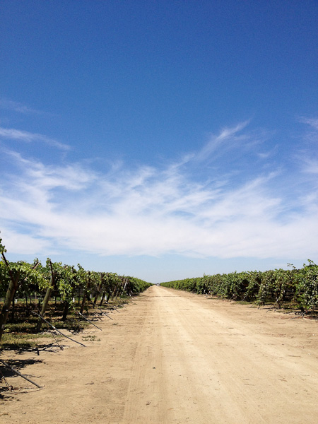 The Grapery farm, Moscato grapes, grower tour