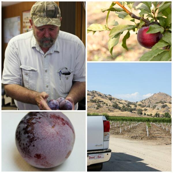 Grower tour, Melissa's Produce, Phillips Farms