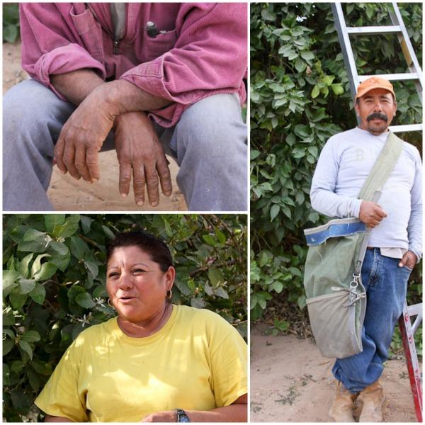 farm workers, citrus farm, Coachella Valley