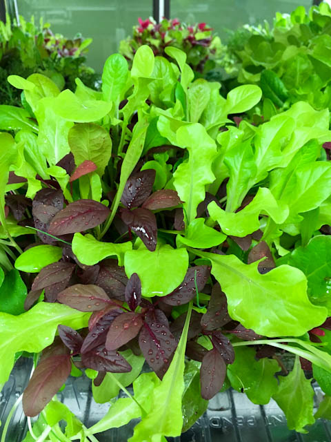 Urban Produce - Sexy Salad Mix | ShesCookin.com