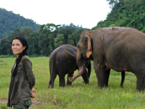 The Gray Event, Save the Elephants