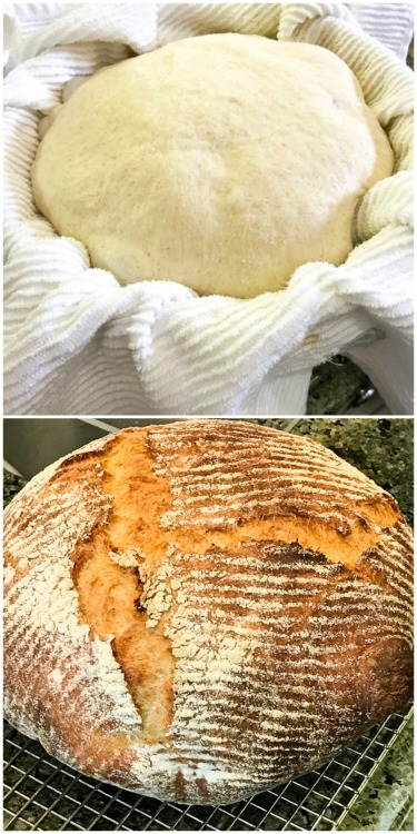 No knead French Country Bread before and after