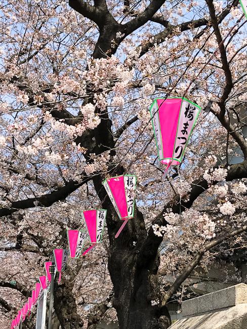 Tokyo Cherry Blossom Festival | ShesCookin.com