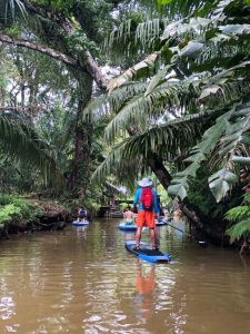 Standup paddleboarding on Mangrove River