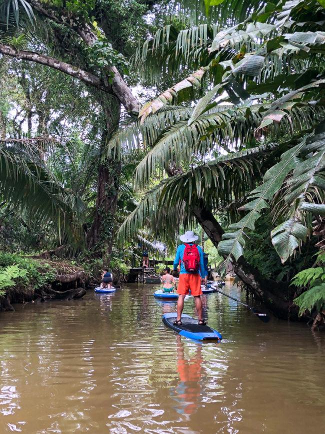Standup paddleboarding on Mangrove River