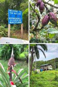 Bocas del Toro Bat Cave sign and tropical flowers