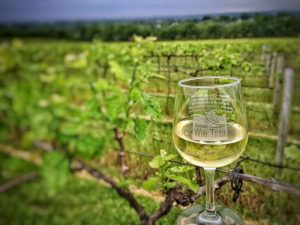 vineyard view with glass, robller winery, missouri