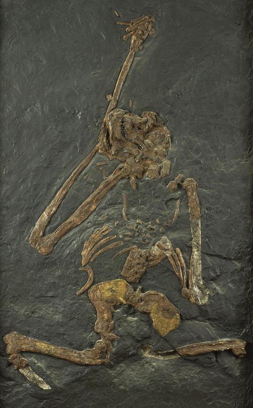 Bambolii fossil