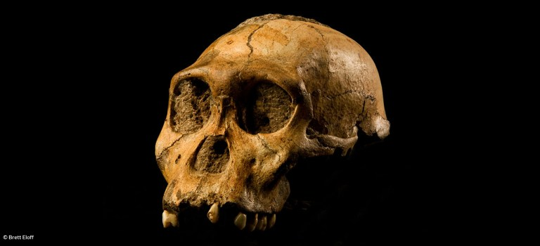 3 Ways That Answers in Genesis Doesn't Understand Australopithecus sediba