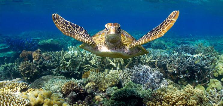 Snorkeling! Hope I get to meet a few sea turtles!