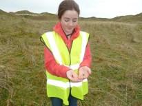 Biodiv walk burnet moth catterpillar and cinnebar moth