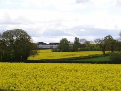 Oilseed Rape, Ledbury