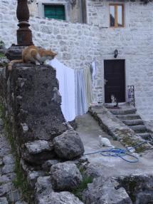 Cats of Kotor
