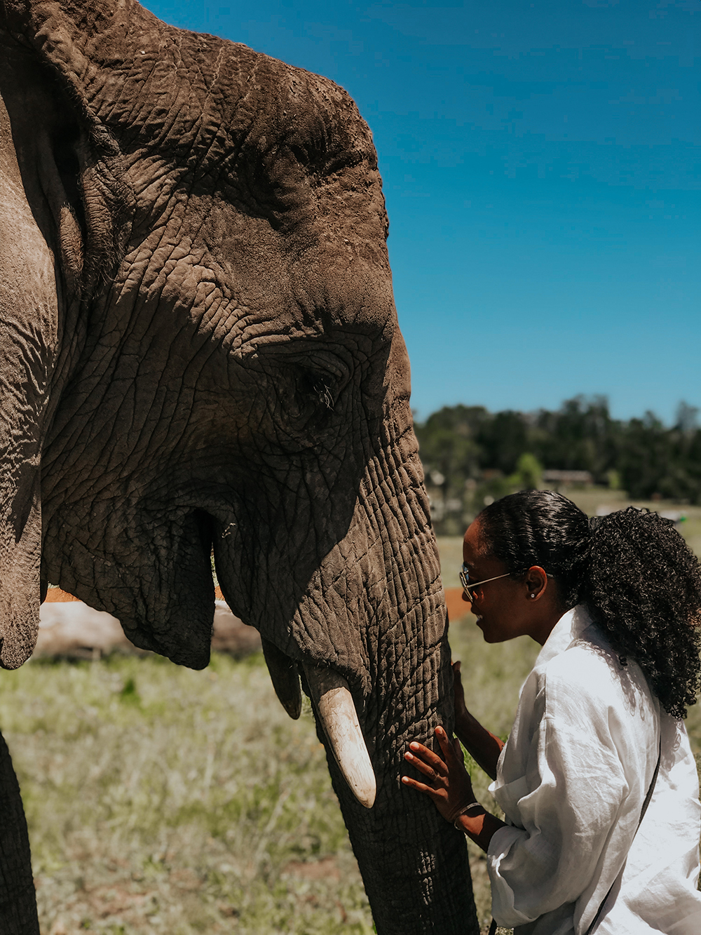 Walking With Elephants |SHESOMAJOR27a