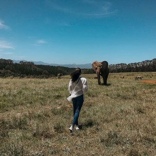 Walking With Elephants |SHESOMAJOR32ab