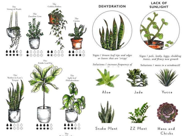 9 Essential Indoor Plant Resources to Finally Keep One Alive