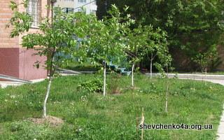Новые деревца во дворе