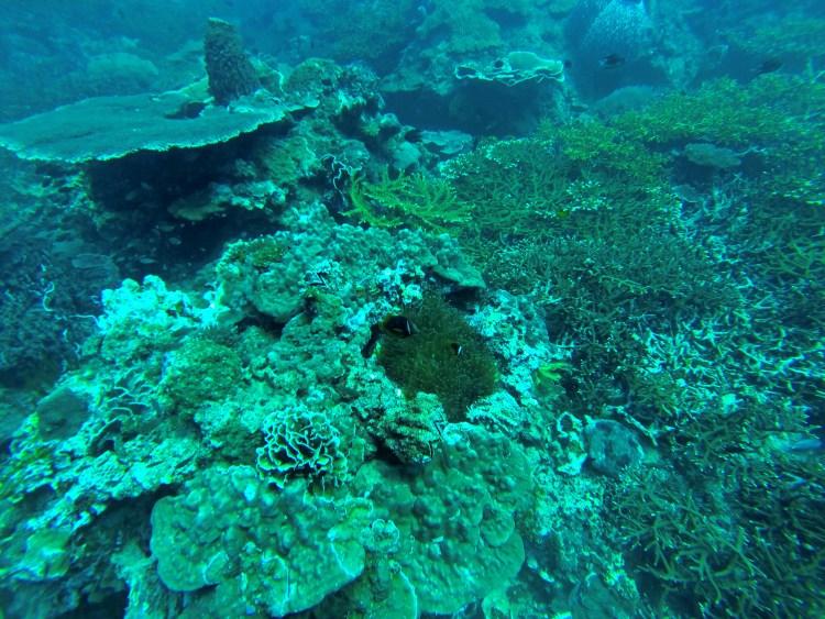Underwater Corals