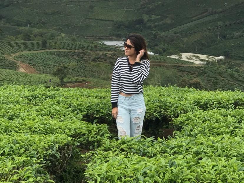 Cao Dat Tea Farm