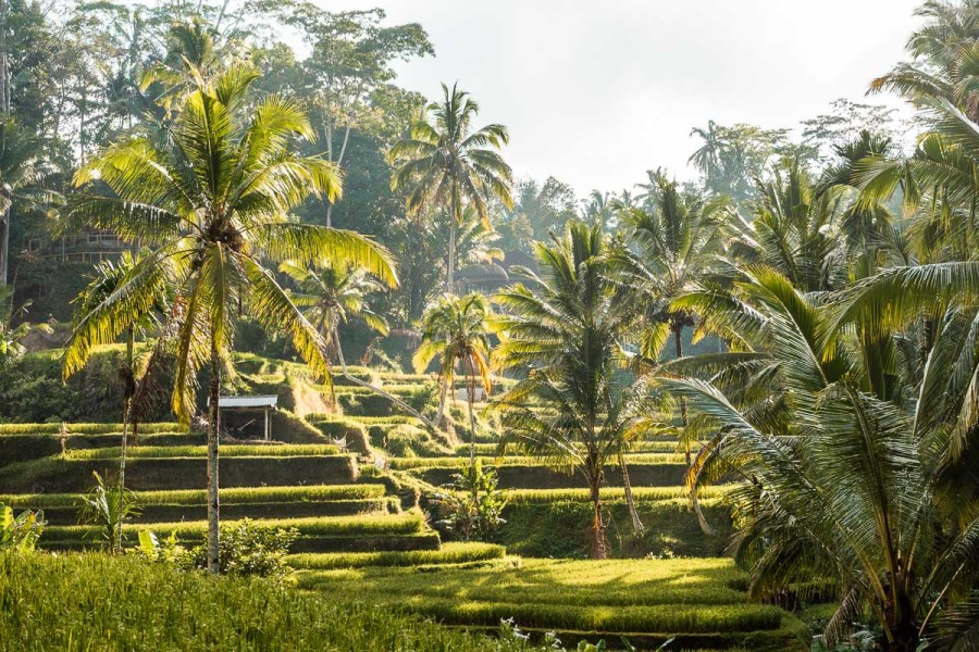 Sunrise at the Tegallalang Rice Terraces in Bali