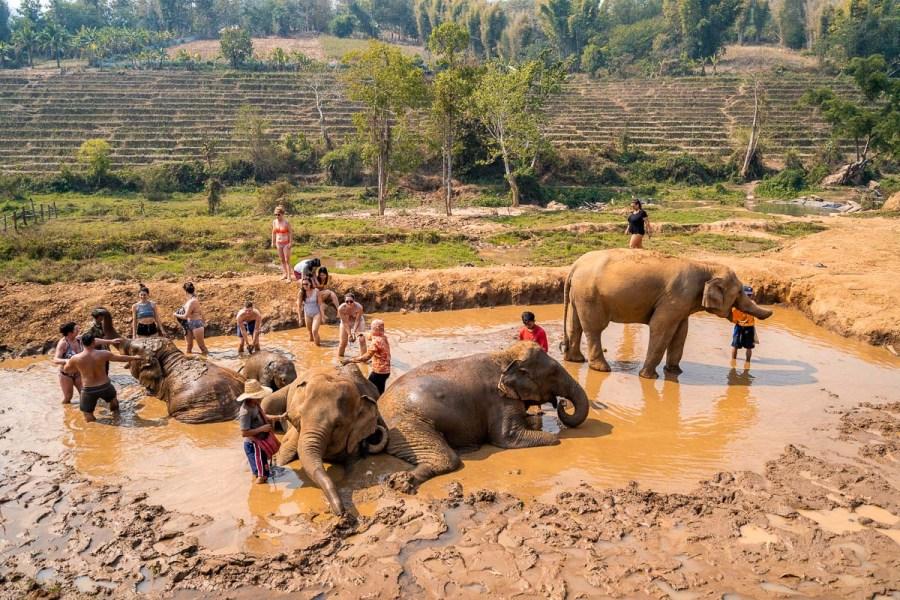Mud bathing with the elephants at Elephant Jungle Sanctuary Chiang Mai