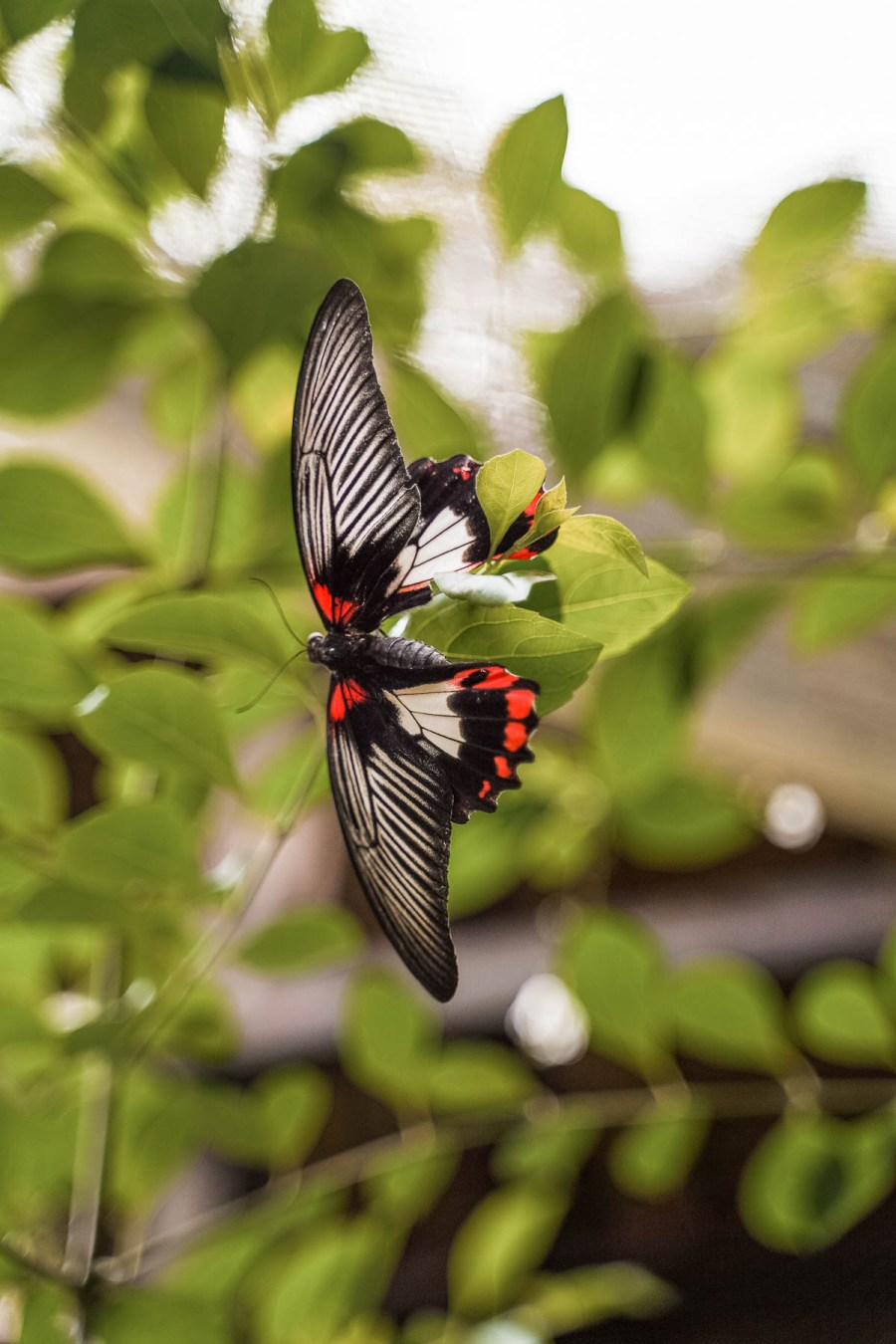 Beautiful butterfly in the