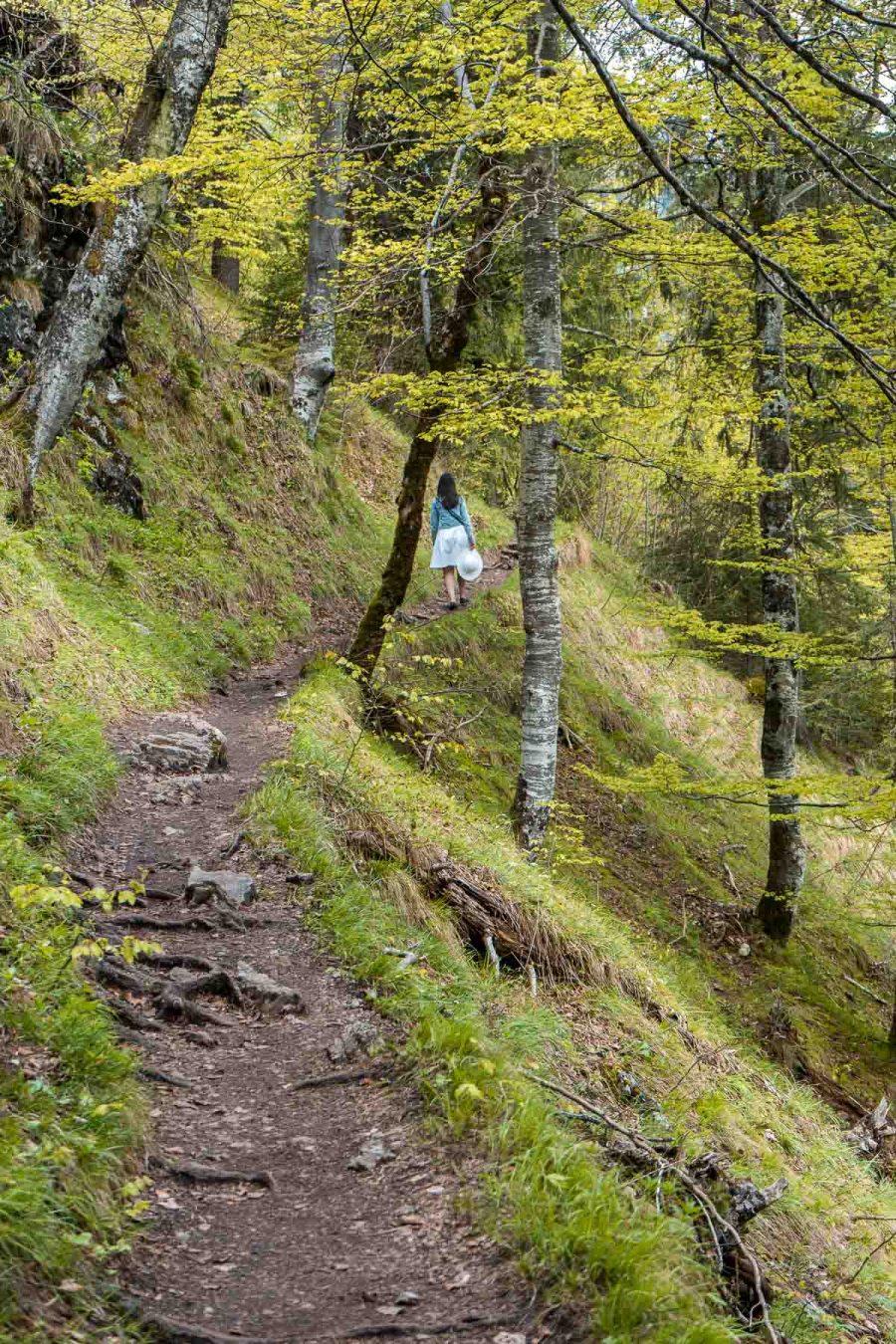 Roads leading to the Neuschwanstein Castle