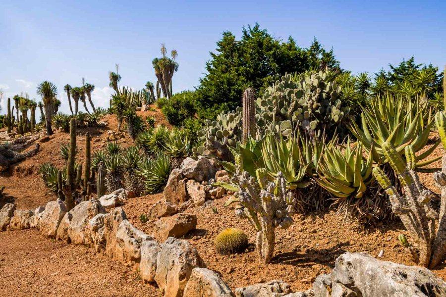Desert landscape at Botanicactus in Mallorca