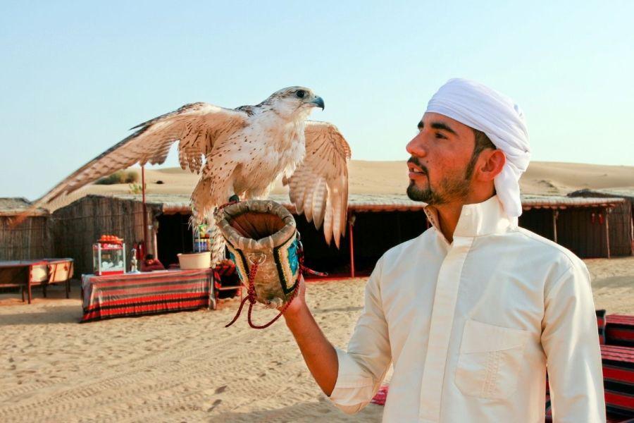 Dubai Safari Tour with Falconry