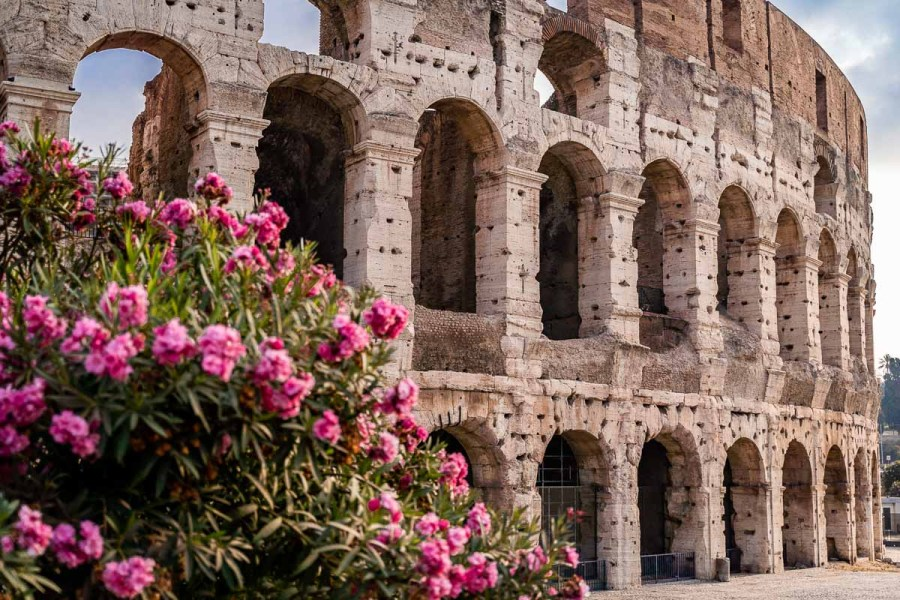 Colosseum with pink flowers in the foreground in Rome, Italy