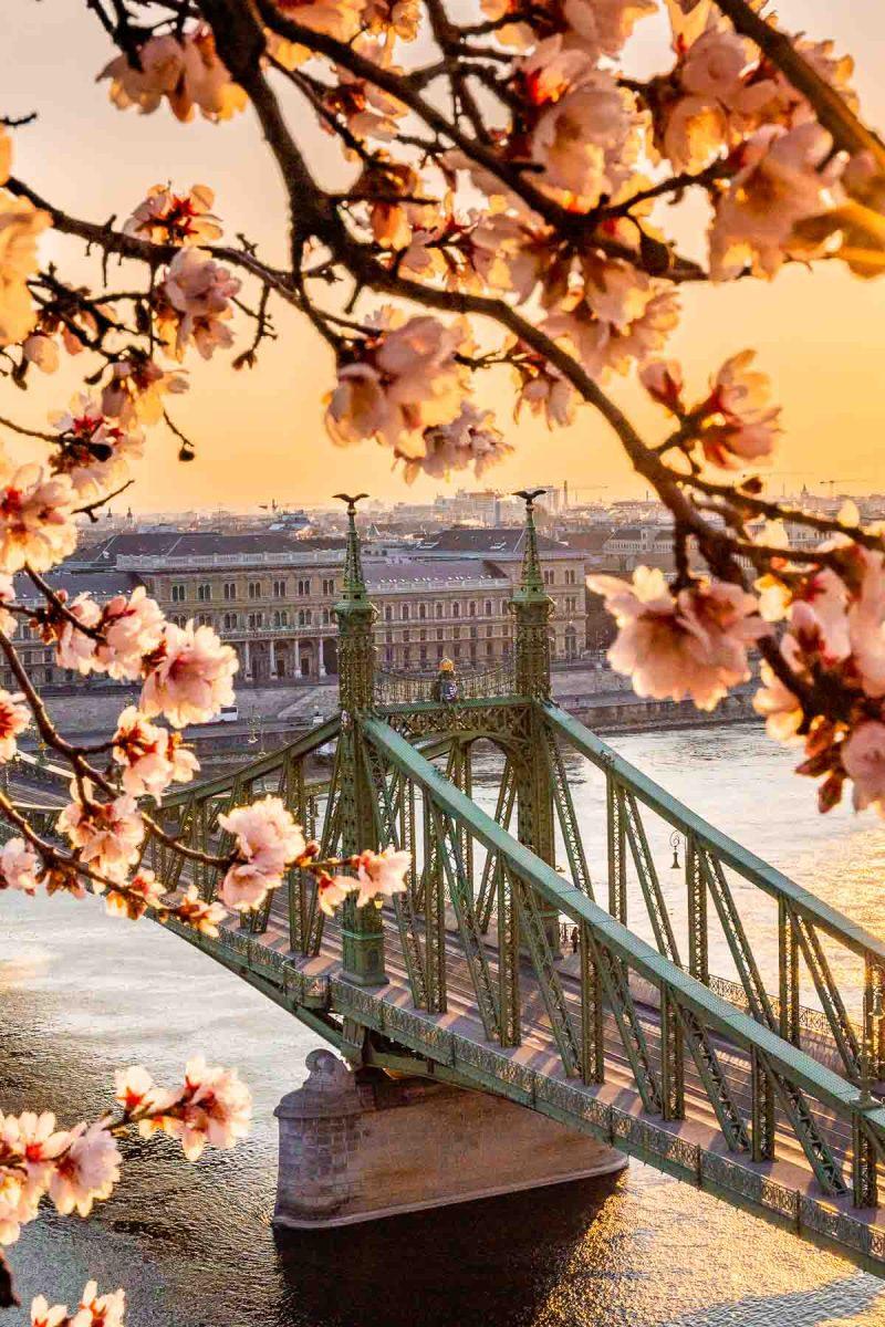 Liberty Bridge with almond blossoms