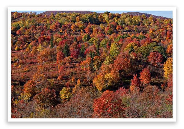 fallleafcolor15