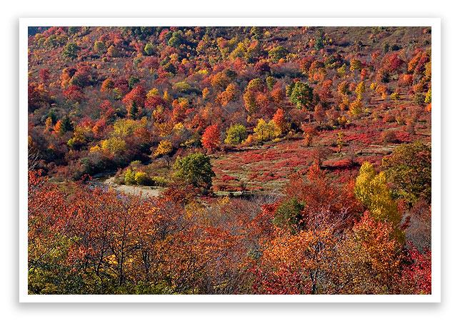 fallleafcolor16