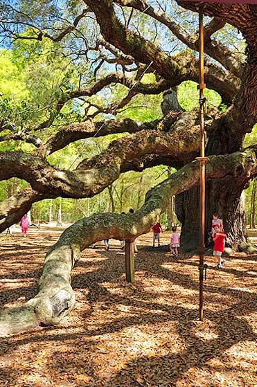 old oak in sc