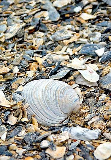 botany bay shells