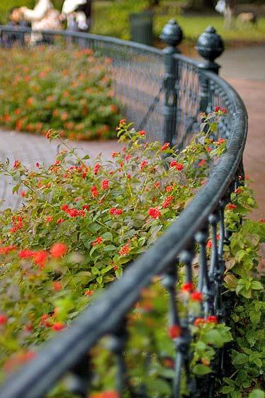 flowers in savannah georgia