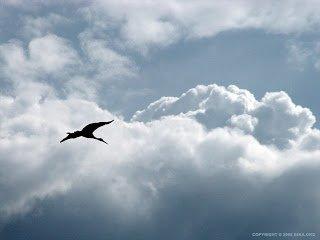 54ka_flight