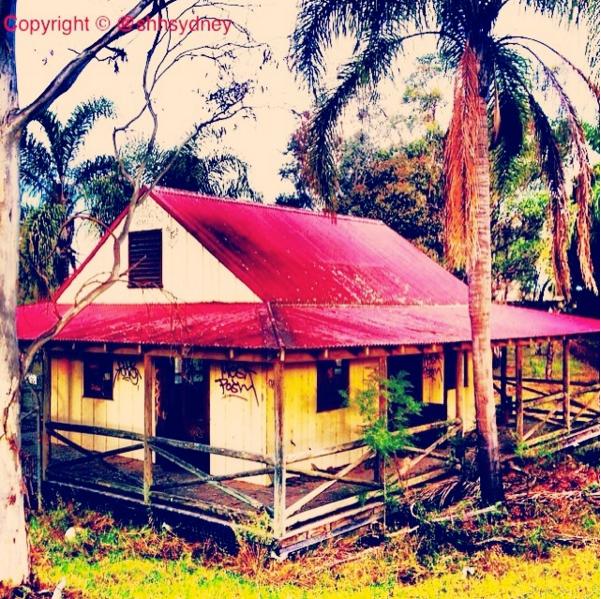 Australiana Zoo - pizza-like hut amongst the palms