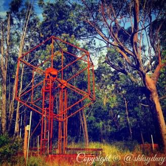 rusty ferris wheel dwarfed by trees