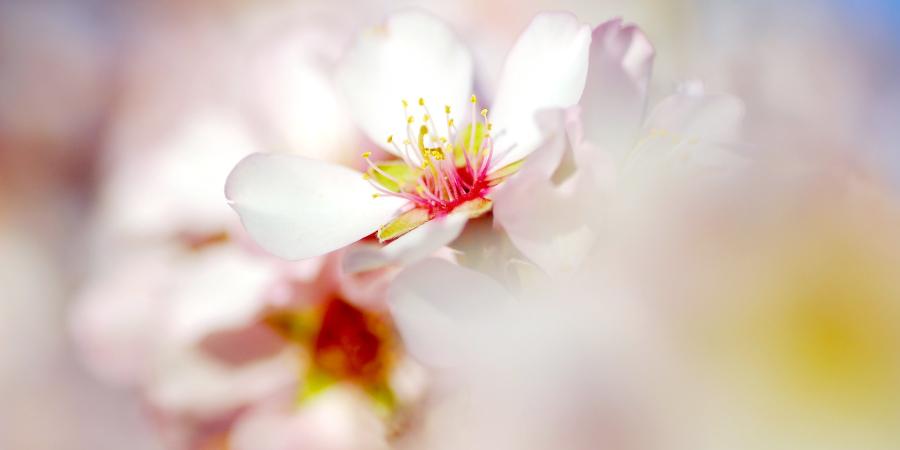 Белый светящийся цветок