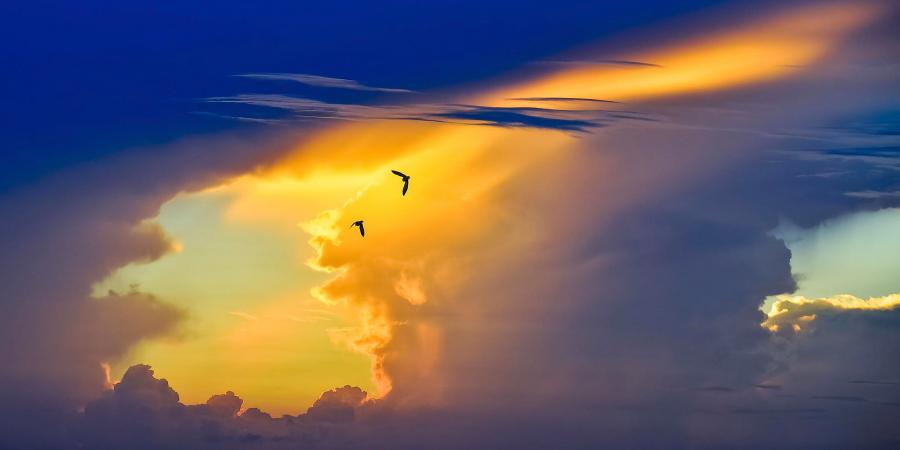 Две птицы, летящие на фоне красивого сине-жёлтого неба