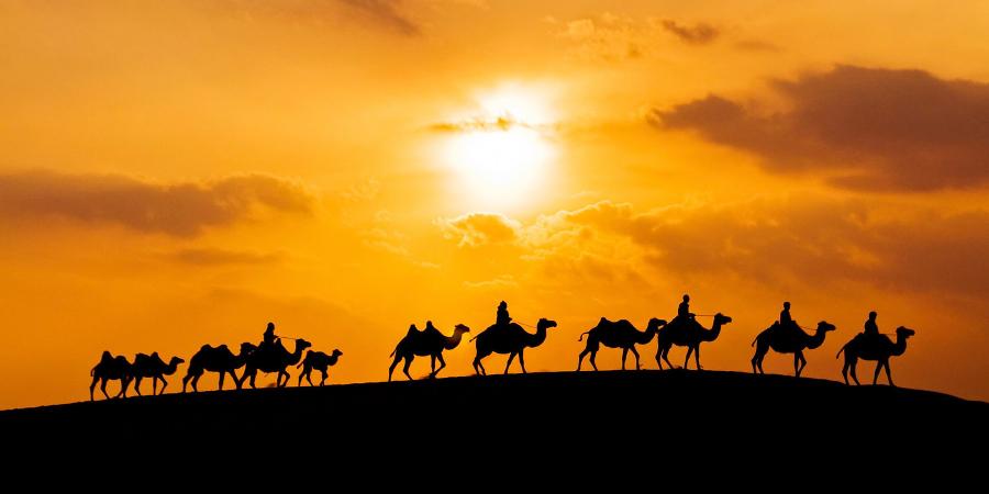 Хадис о «Верблюжьей битве» или сражении «Джамаль»