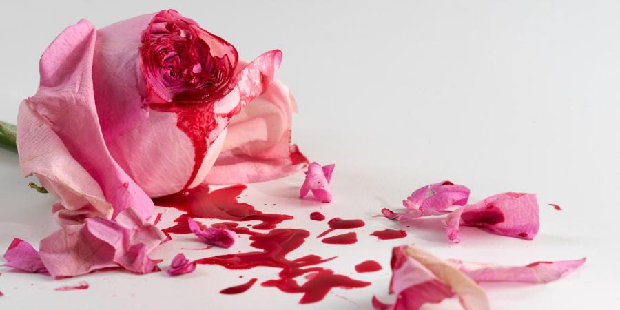 Окровавленная роза на белом фоне