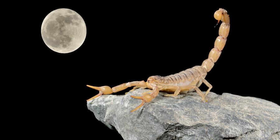 Скорпион на фоне полной Луны